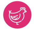 picto poule